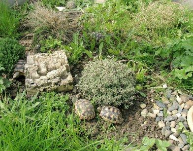 Kleiner Kühlschrank Für Schildkröten : Griechische landschildkröten artgerechte haltung